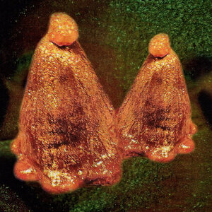 Black To Comm: Oocyte Oil & Stolen Androgens (Thrill Jockey)